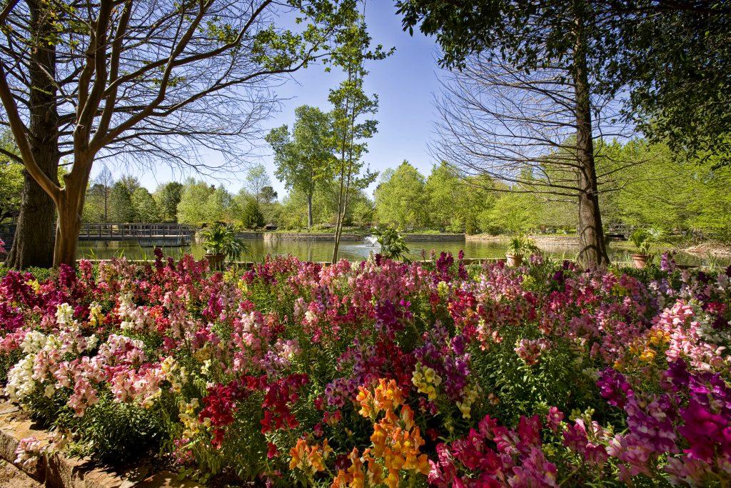Clark Gardens Flowers