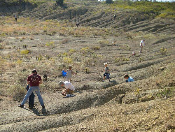 kids and adults digging up fossils at Crazy Fossil Dig