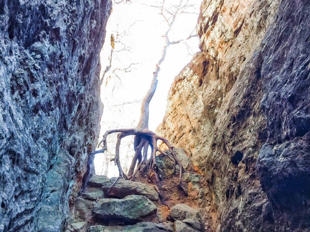 Penitentiary Hollow Tree